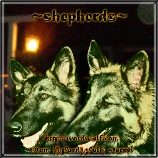 ~shepherds~ X