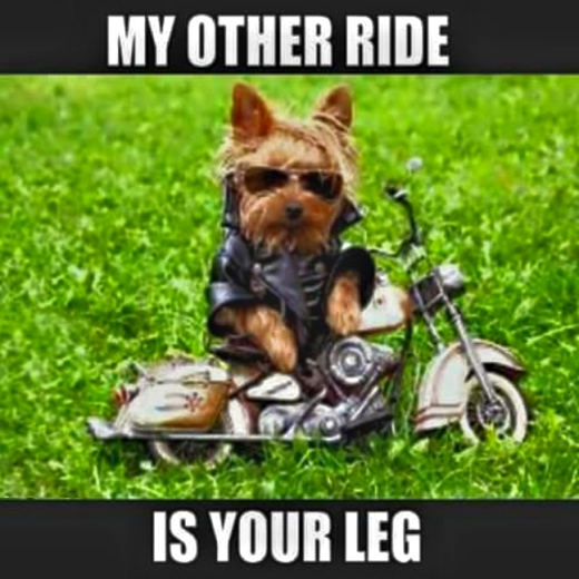 4-21-2017 - ride - humor - dog - your leg